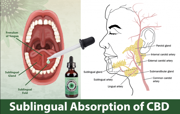 Sublingual absorption of cbd